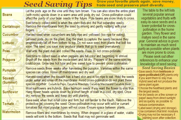 seed saving tips poster